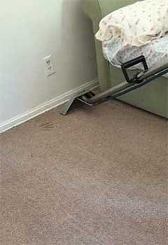 Affordable Carpet Cleaning For Los Angeles Home