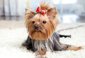Efficient Pet Hair Removal | Los Angeles CA