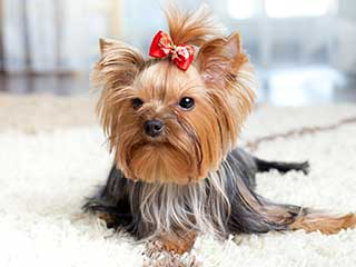 Pet Hair Removal | Los Angeles Carpet Cleaning Los Angeles