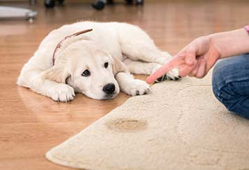 Pet Stain and Odor Removal Basics | Los Angeles CA